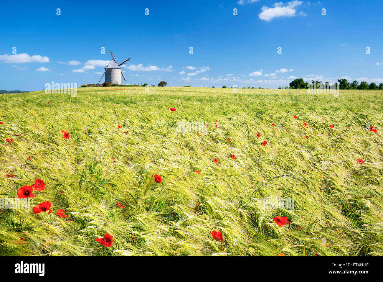 Windmill and wheat field, France, Europe. - Stock Image