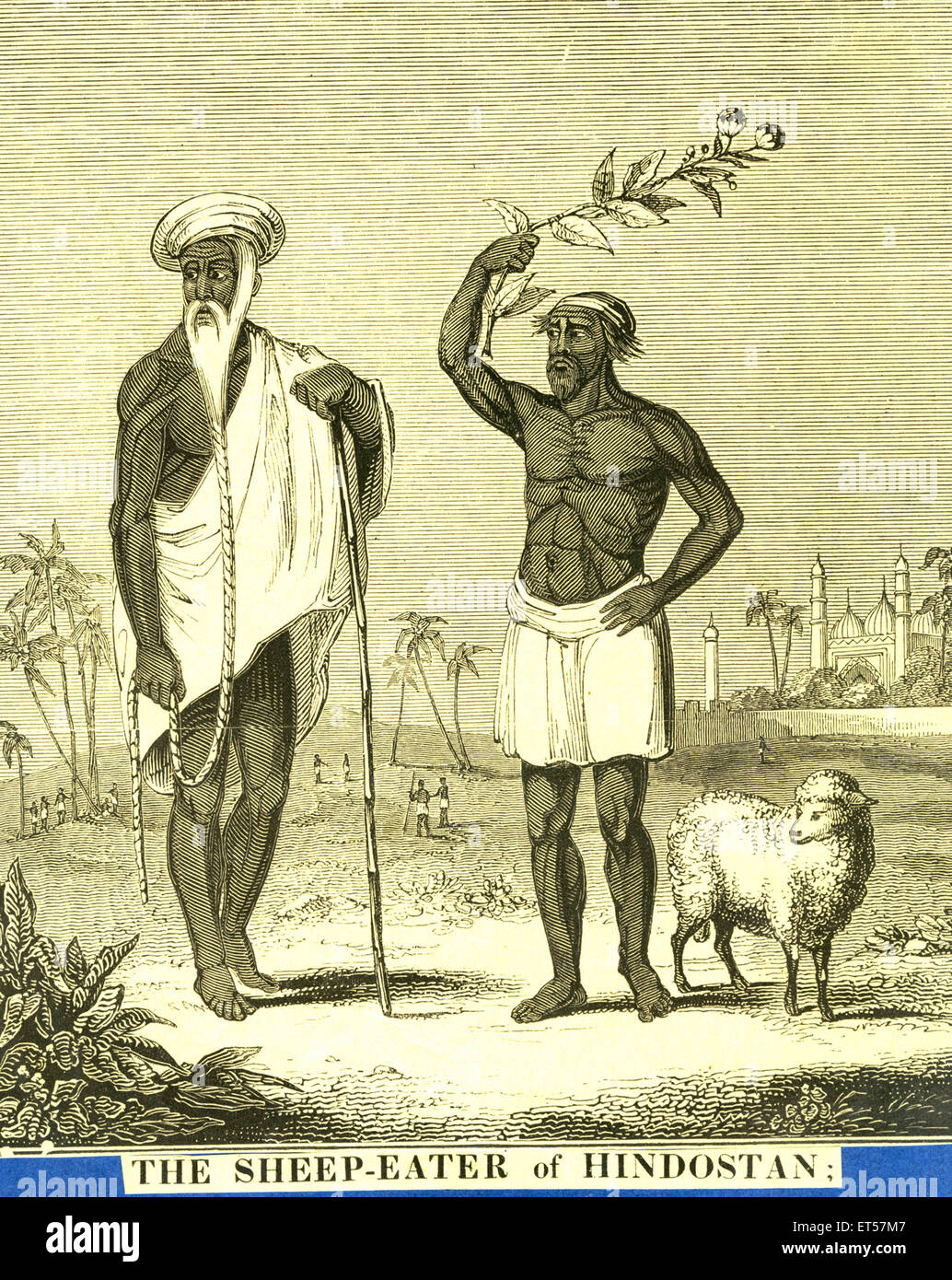 The Sheep eater of Hindustan ; India - Stock Image