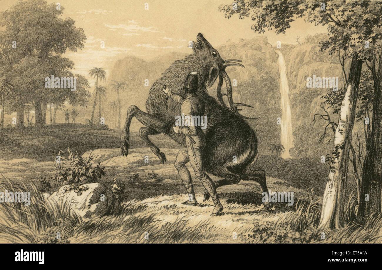 Lithographs killing deer ; India - Stock Image