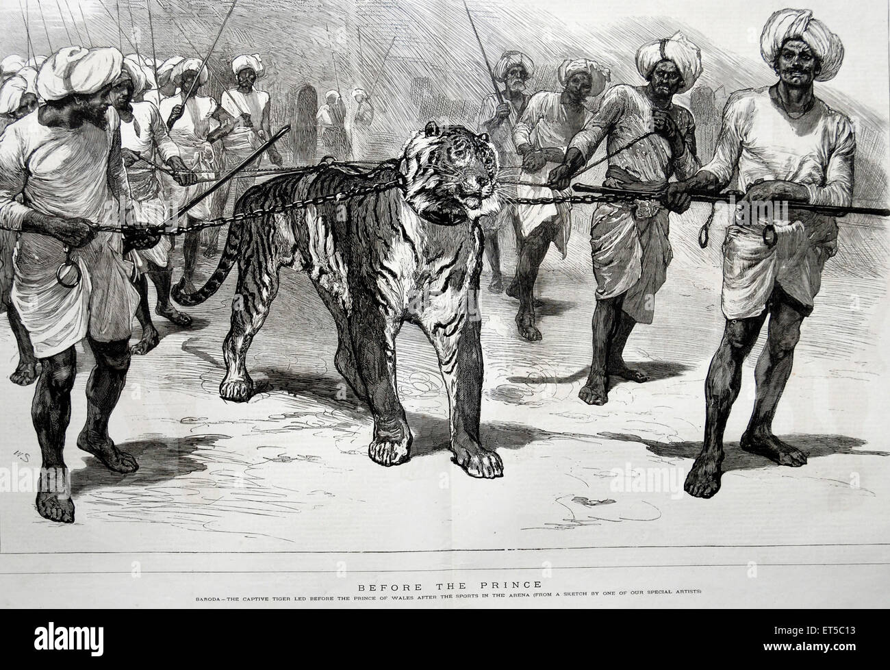 Royalty on Tour  Baroda The captive tiger led before the Prince of Wales after the sports in the Arena ; India - Stock Image