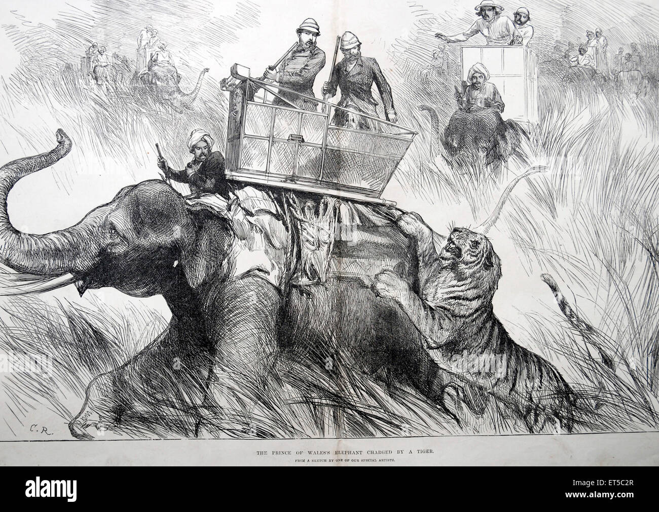 Royalty on Tour The Prince of Wales's Elephant Charged by Tiger ; India - Stock Image