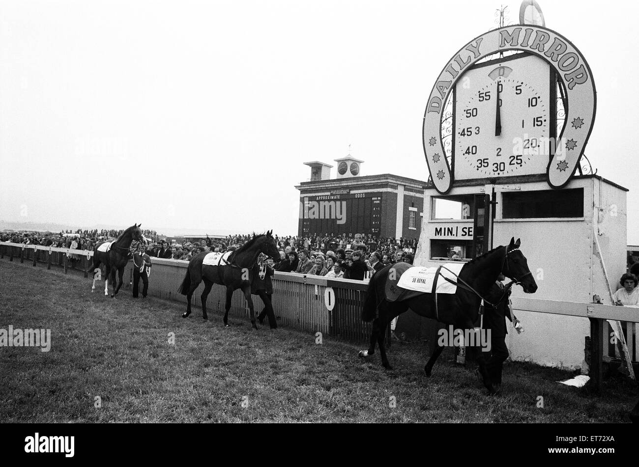 Runners in the Andy Capp Handdicap are paraded past the finishing post lead by So Royal. Redcar, North Yorkshire. - Stock Image