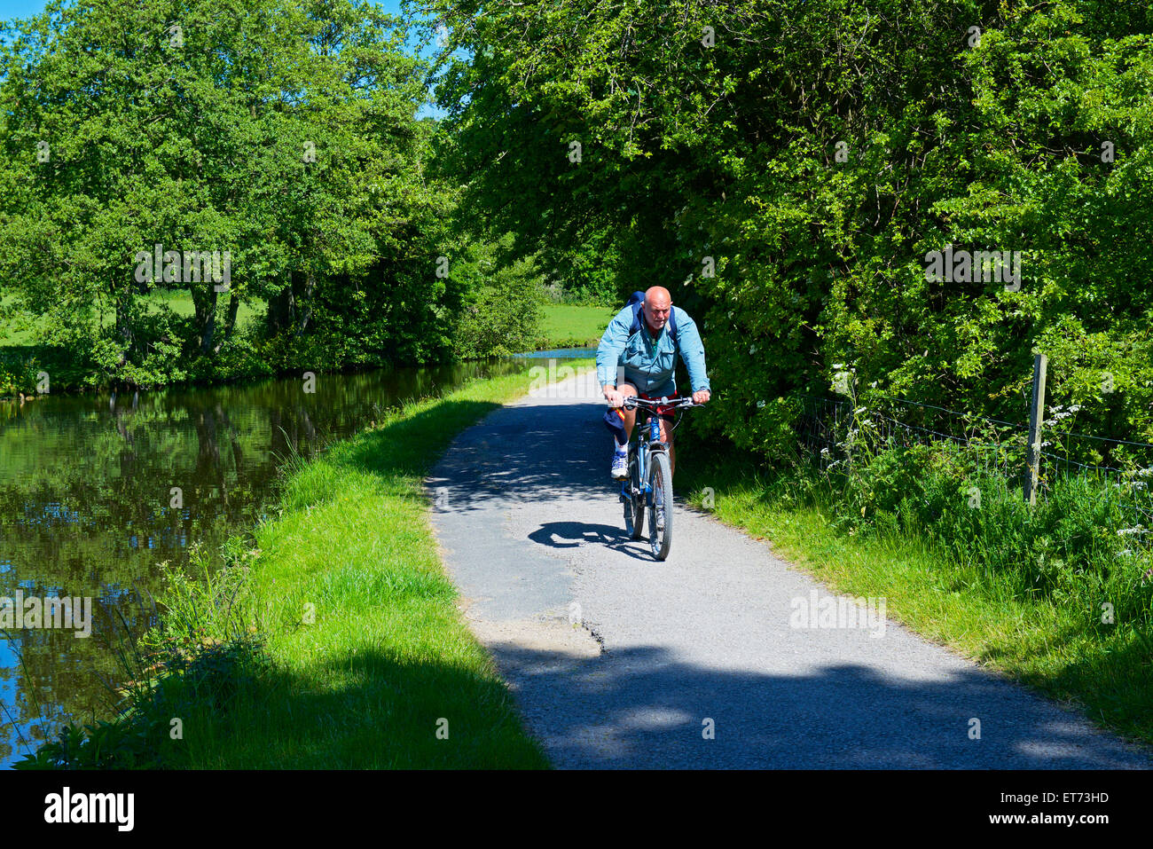 Cyclist on the Leeds-Liverpool Canal near Apperley Bridge, West Yorkshire, England UK - Stock Image