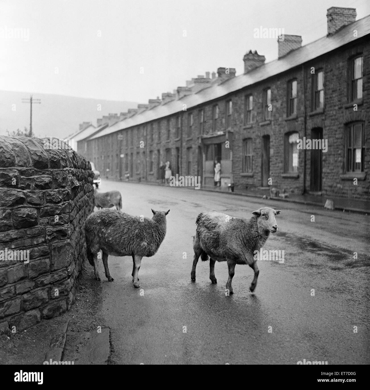 In Abercynon Rhondda Cynon Taf: Rhondda Valley In Wales In Stock Photos & Rhondda Valley