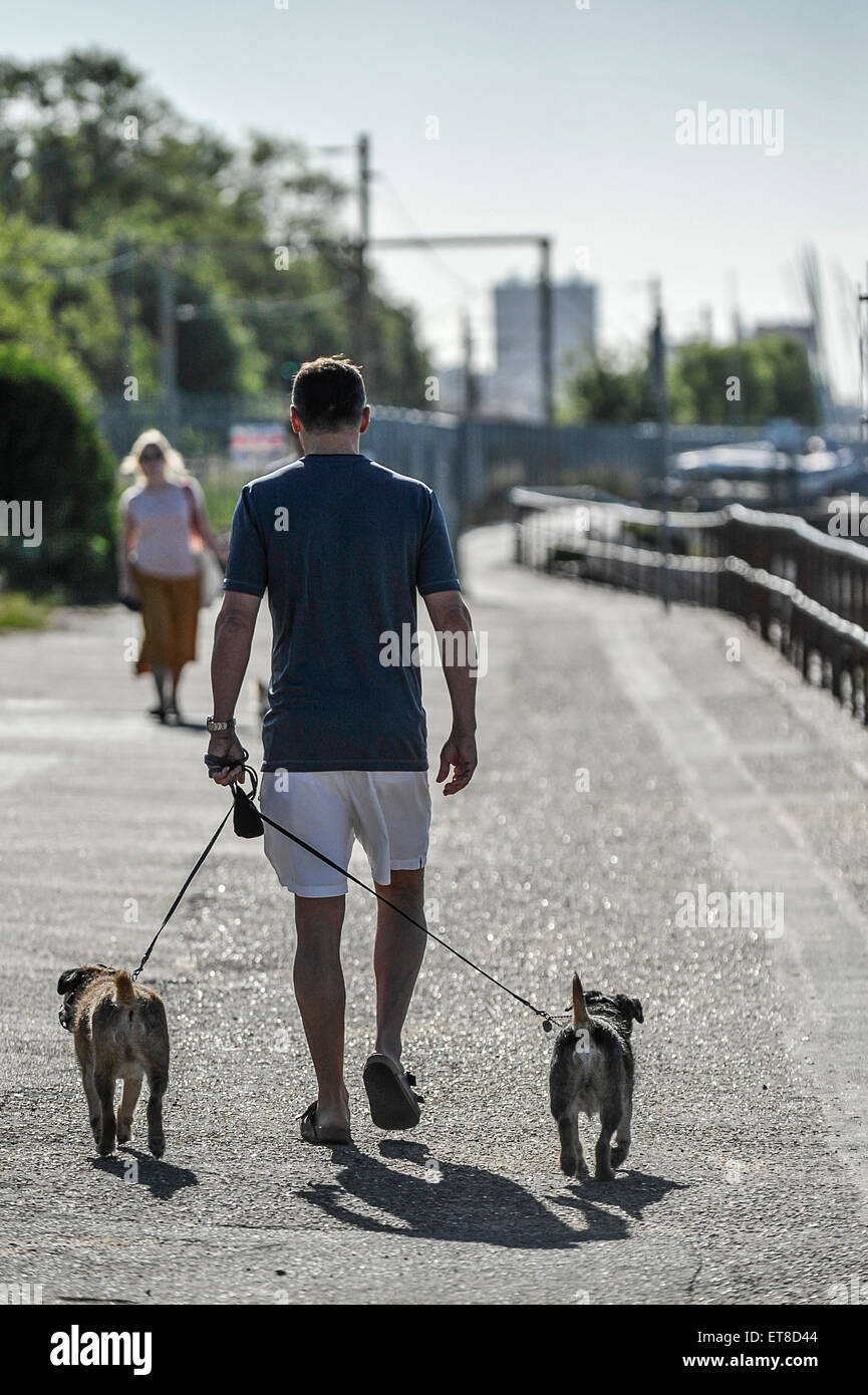 A dog walker in Leigh on Sea in Essex. - Stock Image