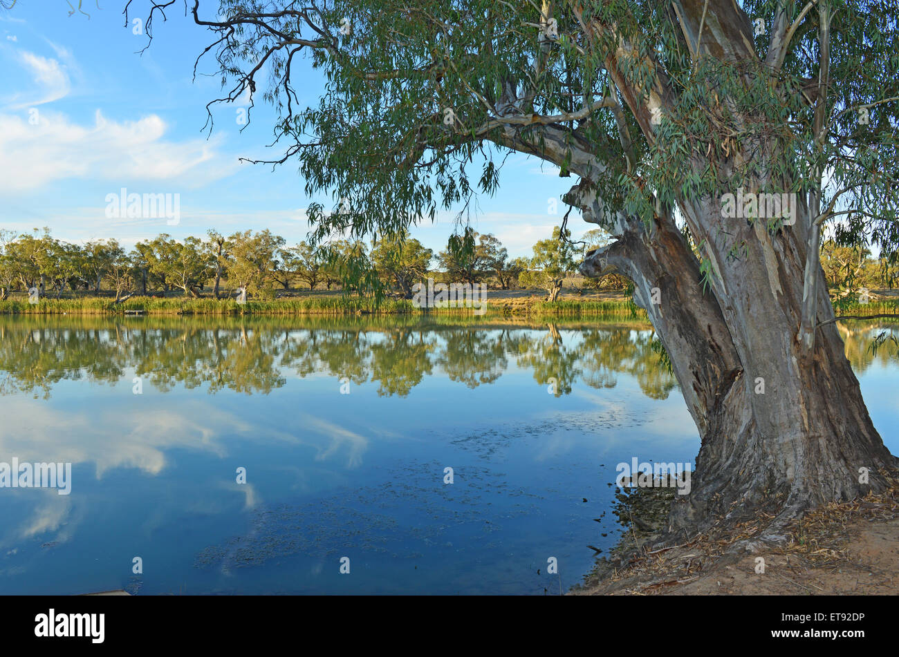 The Murray River near Waikerie - Stock Image
