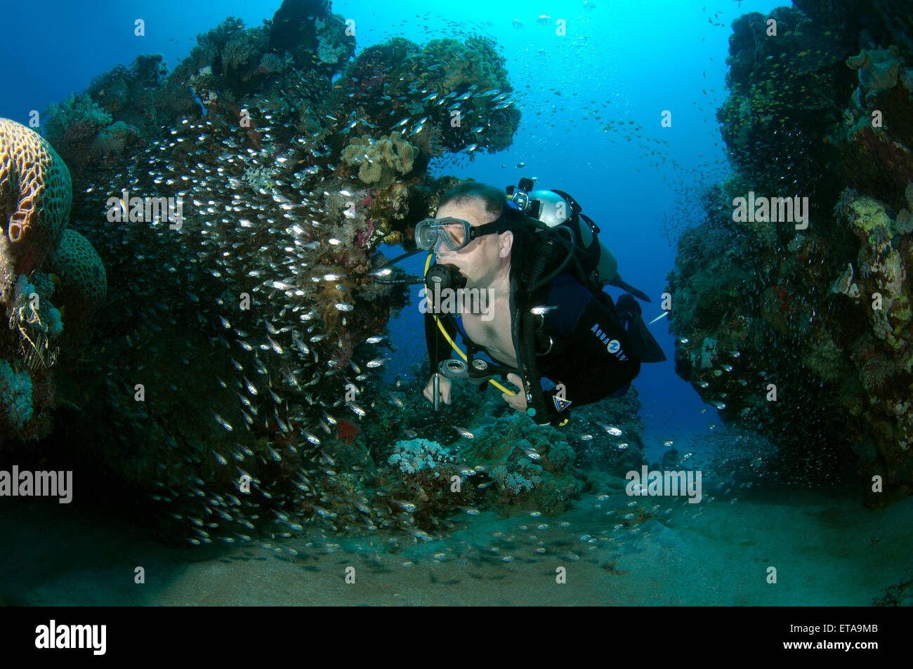 School of Silver Sweeper, Silver Glassy Sweepe, Glassfish, Pigmy Sweeper, Ransonnet's bullseye, Rosy sweep, - Stock Image