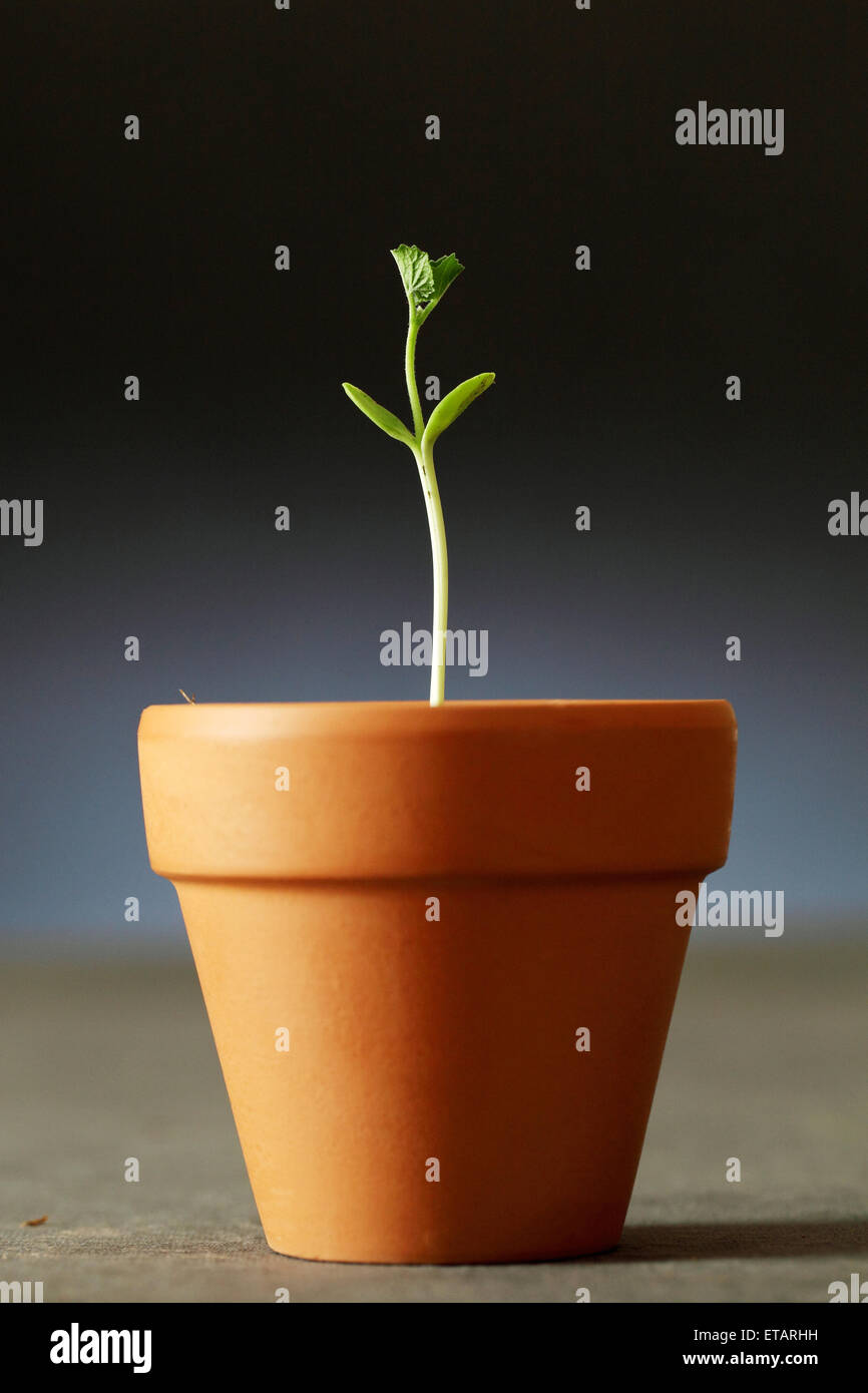Young plant - New life - Stock Image