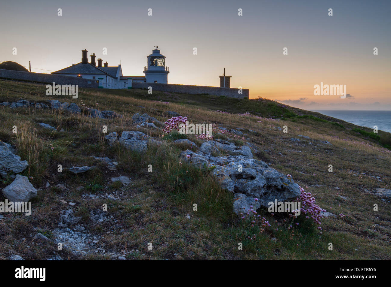pretty pink flowers and lighthouse lit up by sunrise - Stock Image