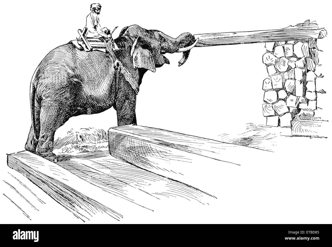 Elephant Completing Work of Piling Timber, Rangoon, Burma, 'Classical Portfolio of Primitive Carriers', - Stock Image