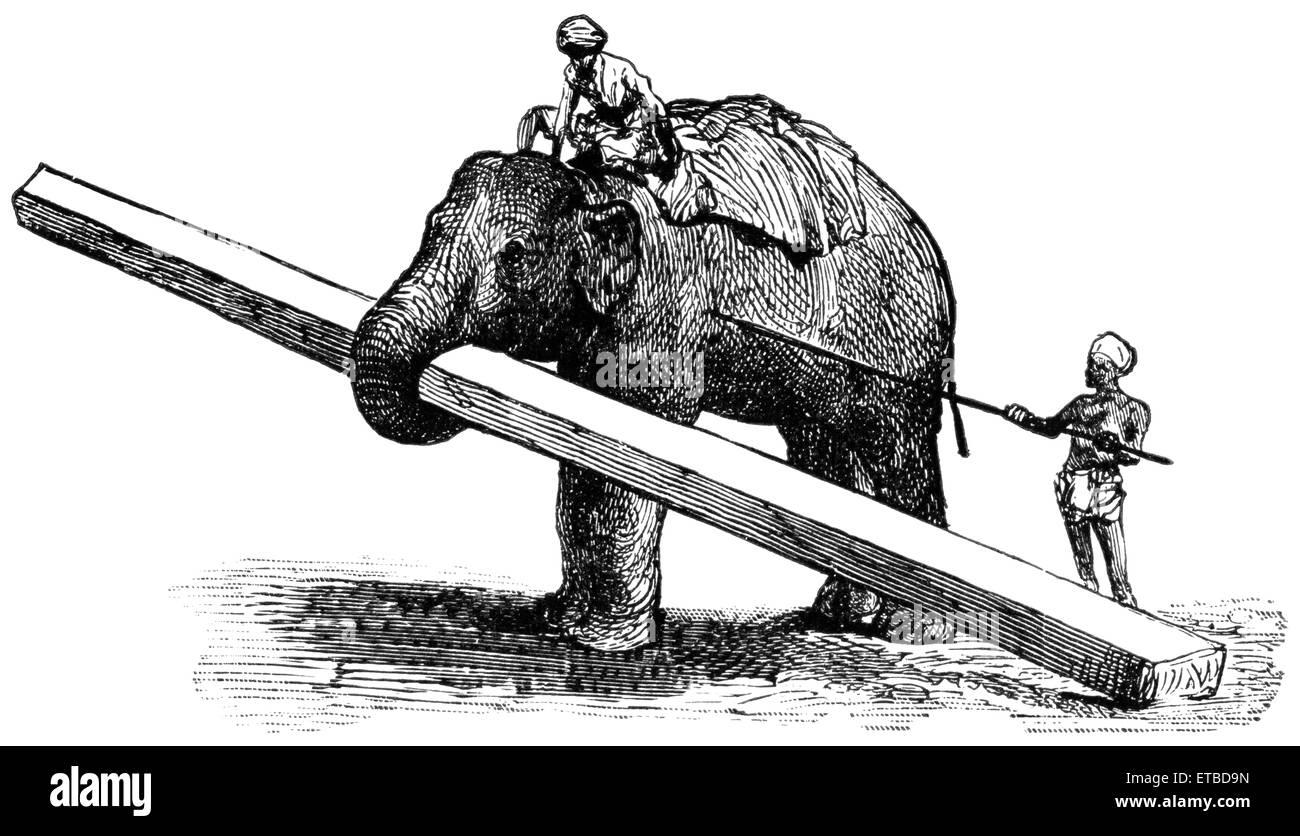 Elephant Carrying Timber, Rangoon, Burma, 'Classical Portfolio of Primitive Carriers', by Marshall M. Kirman, - Stock Image