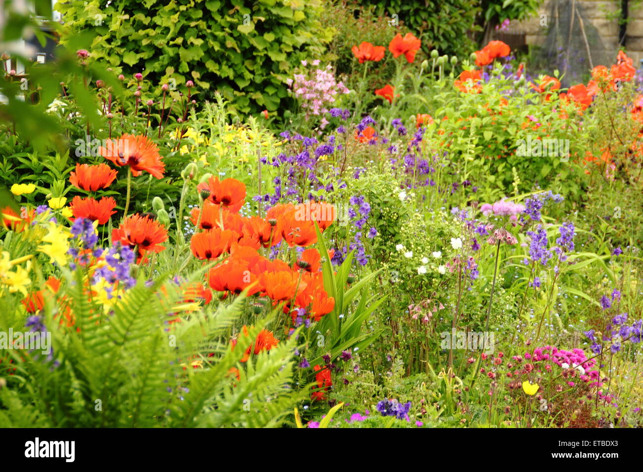 An English Cottage Garden Border Punctuated By Oriental Poppies Aquilegias And Ferns On A Warm