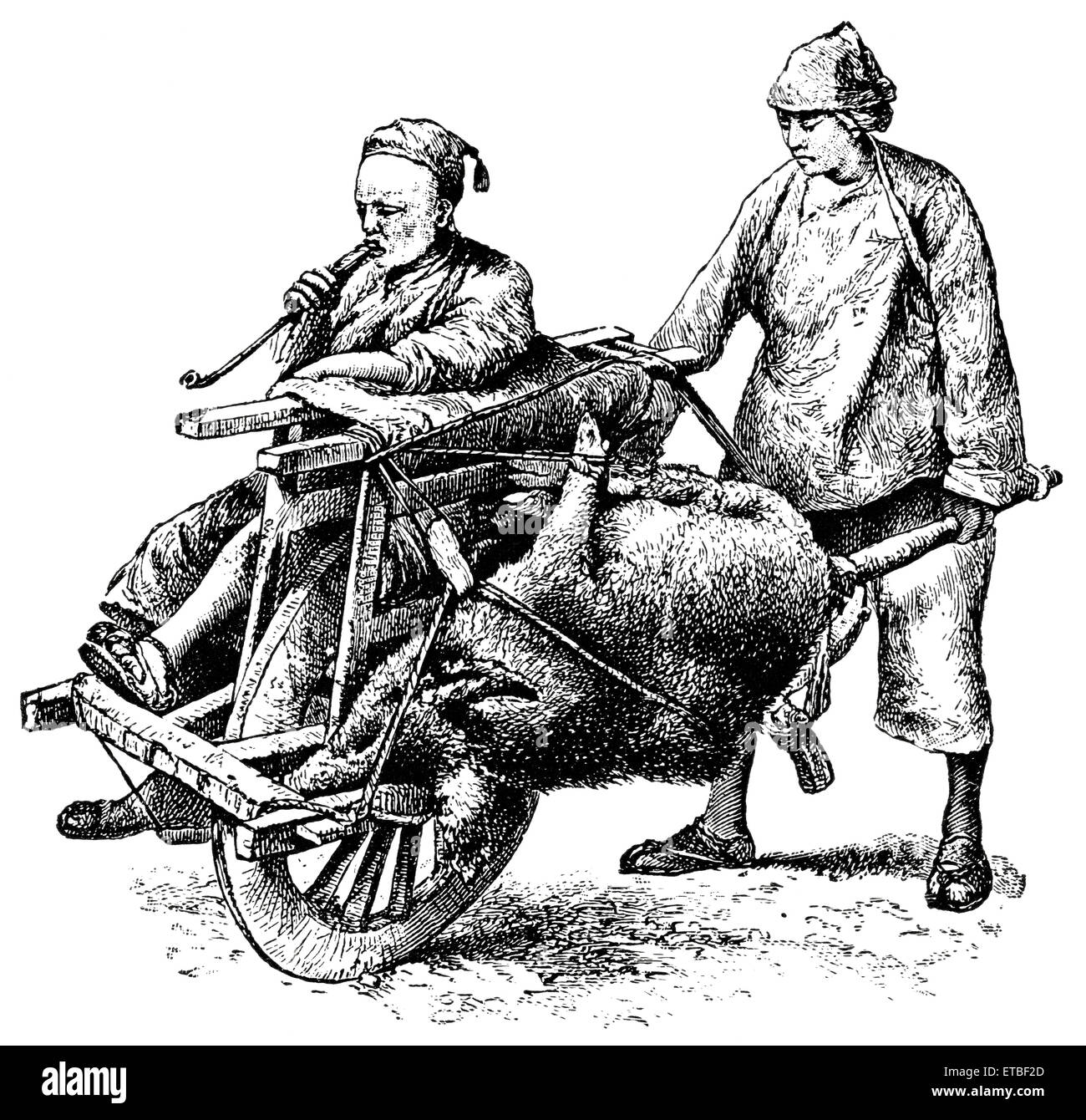Man and Dead Animal Being Transported on Single-Wheel Cart, China, 'Classical Portfolio of Primitive Carriers', - Stock Image