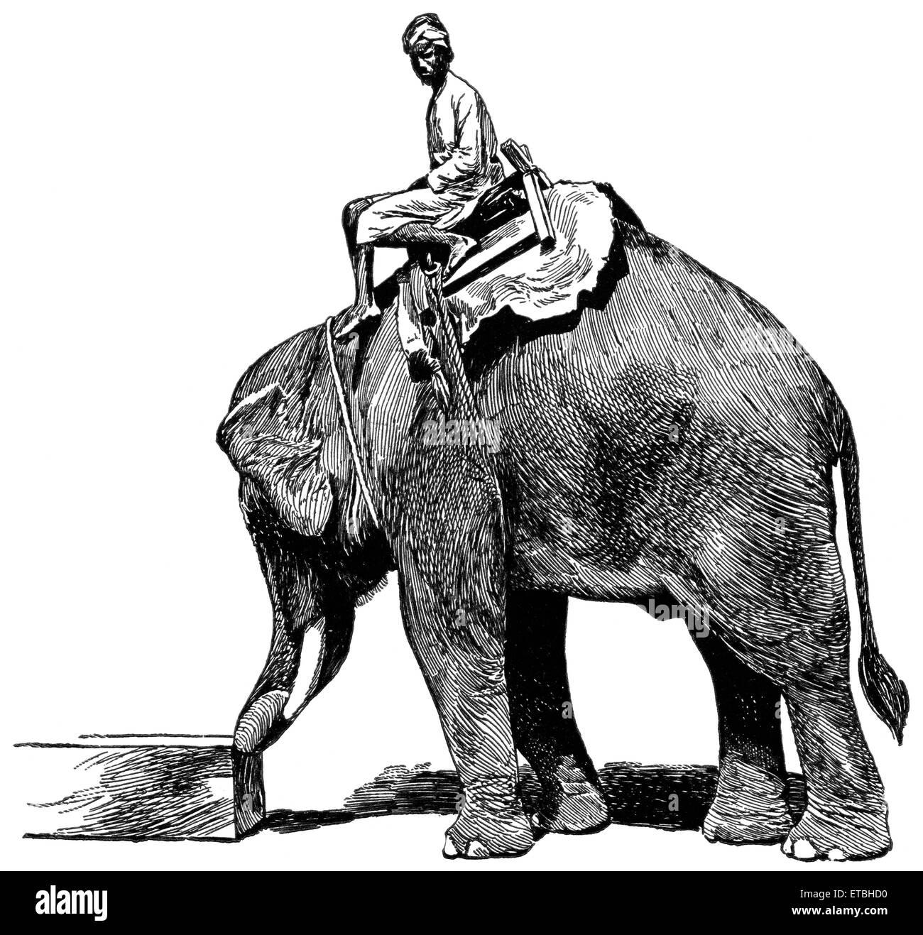 Elephant Pushing Timber, Rangoon, Burma, 'Classical Portfolio of Primitive Carriers', by Marshall M. Kirman, - Stock Image