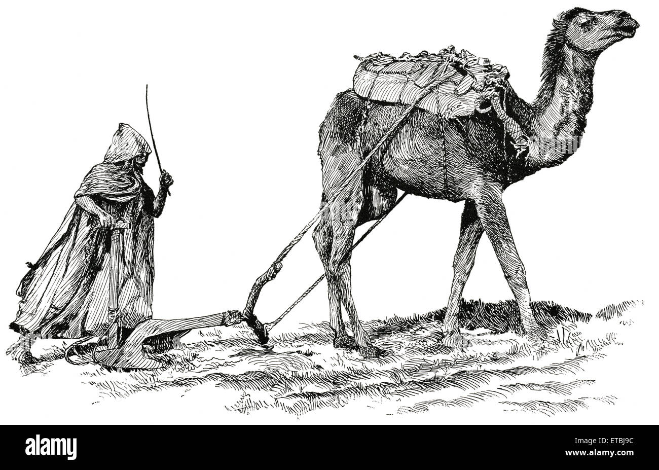 Arabian plow