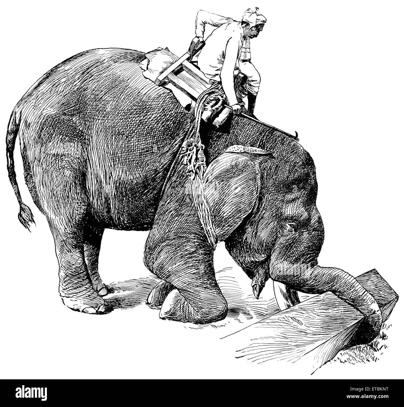 Elephant Picking Up Timber, Rangoon, Burma, 'Classical Portfolio of Primitive Carriers', by Marshall M. - Stock Image