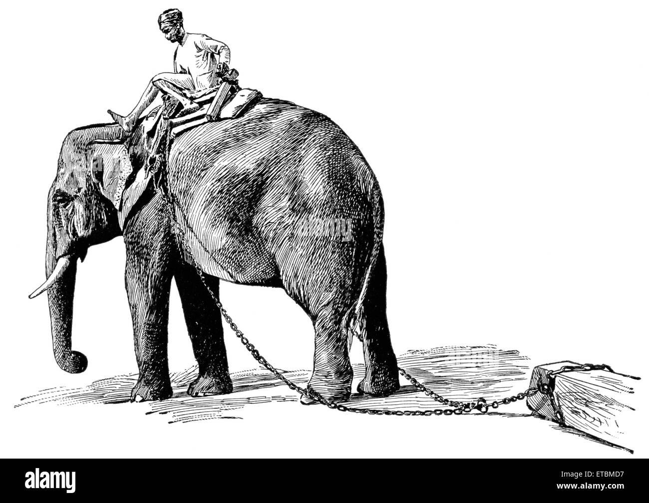 Elephant Pulling Timber, Rangoon, Burma, 'Classical Portfolio of Primitive Carriers', by Marshall M. Kirman, - Stock Image
