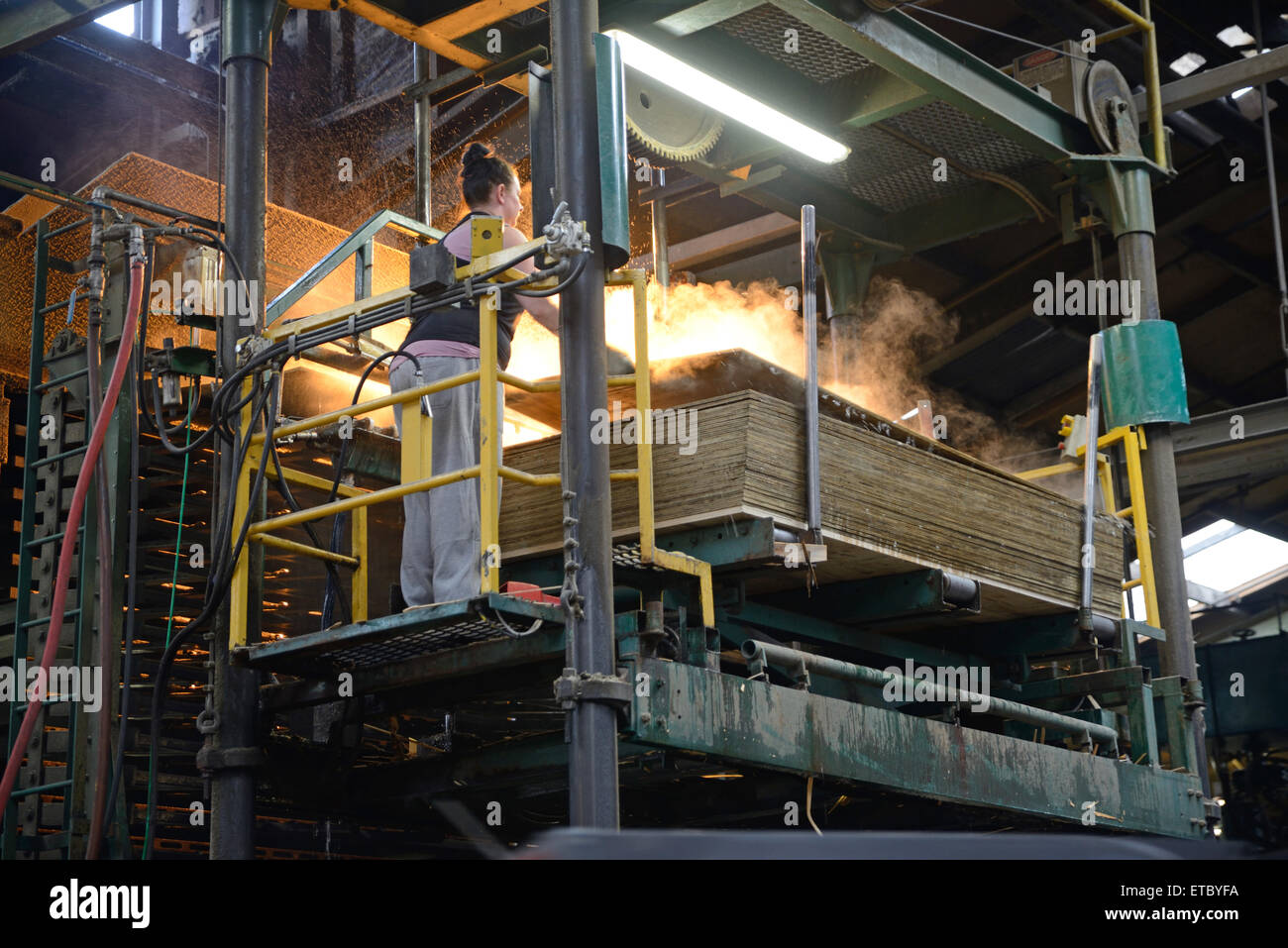 GREYMOUTH, NEW ZEALAND, MAY 22, 2015 : worker stacks freshly made  untrimmed sheets of plywood on May 22, 2015, - Stock Image