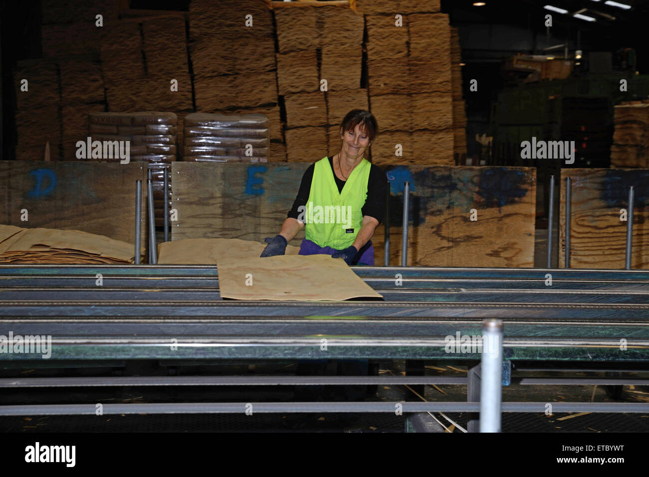 GREYMOUTH, NEW ZEALAND, MAY 22, 2015 : An unidentified worker grades freshly dried  sheets of veneer for pressing - Stock Image