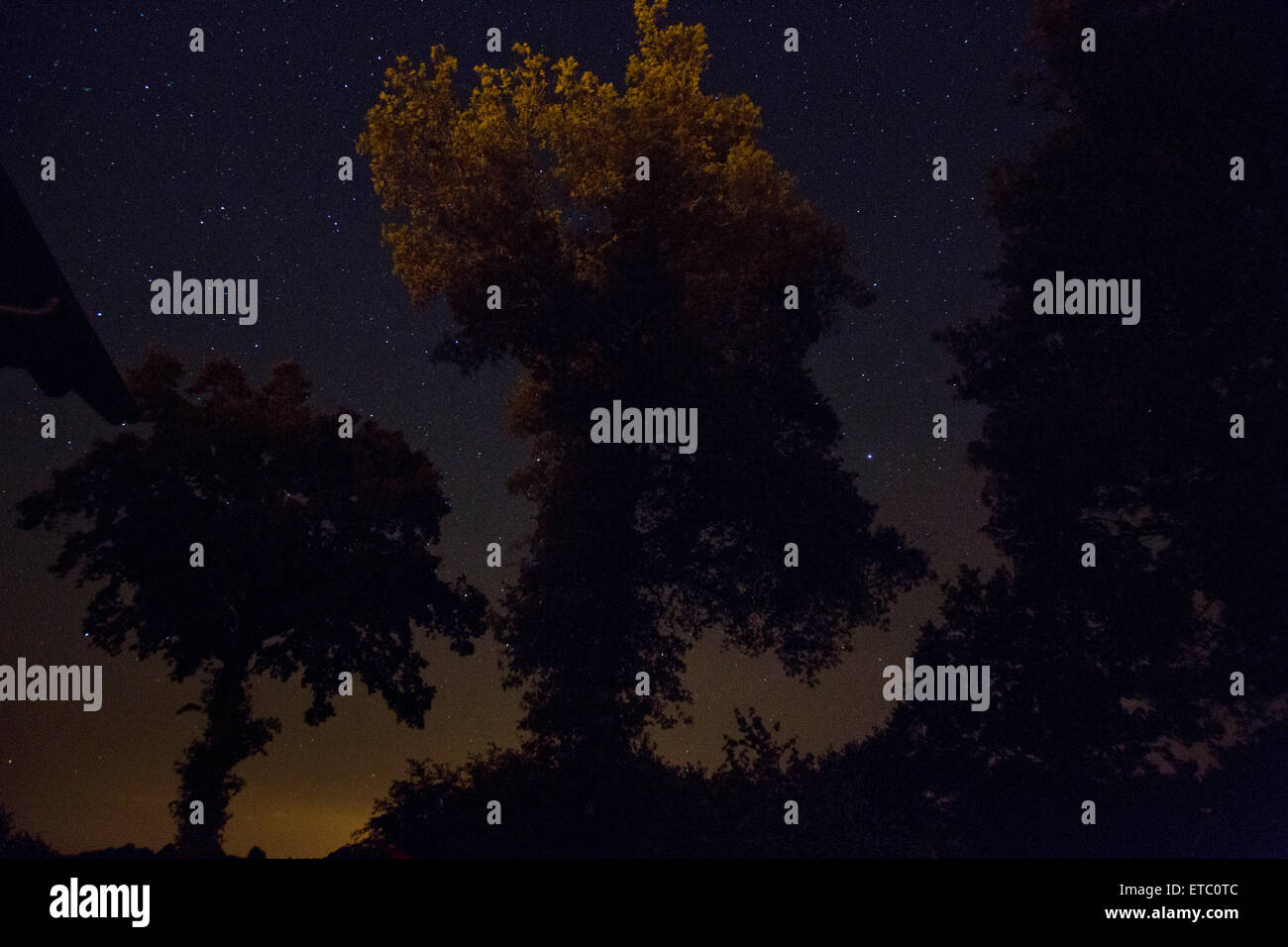 Night sky with stars and silhouetted trees - Stock Image