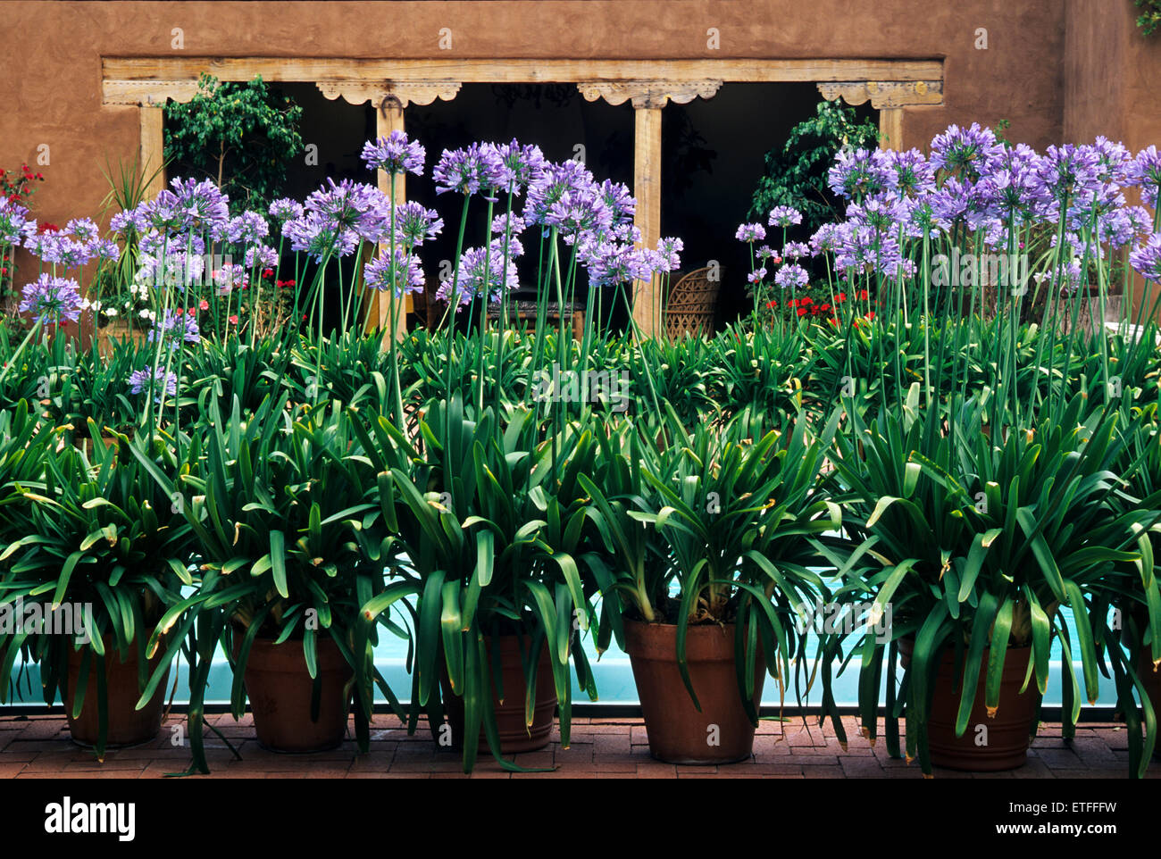 The gardens of Santa Fe,New Mexico, offer a constant supply of delightful surprises and artful delights. - Stock Image