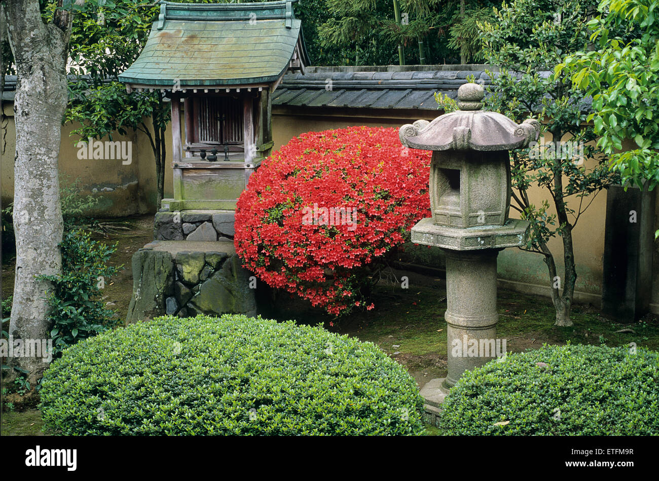 A single red azalea creates a contrasting blaze of color against the stone shrine and lantern of a Zen garden... - Stock Image