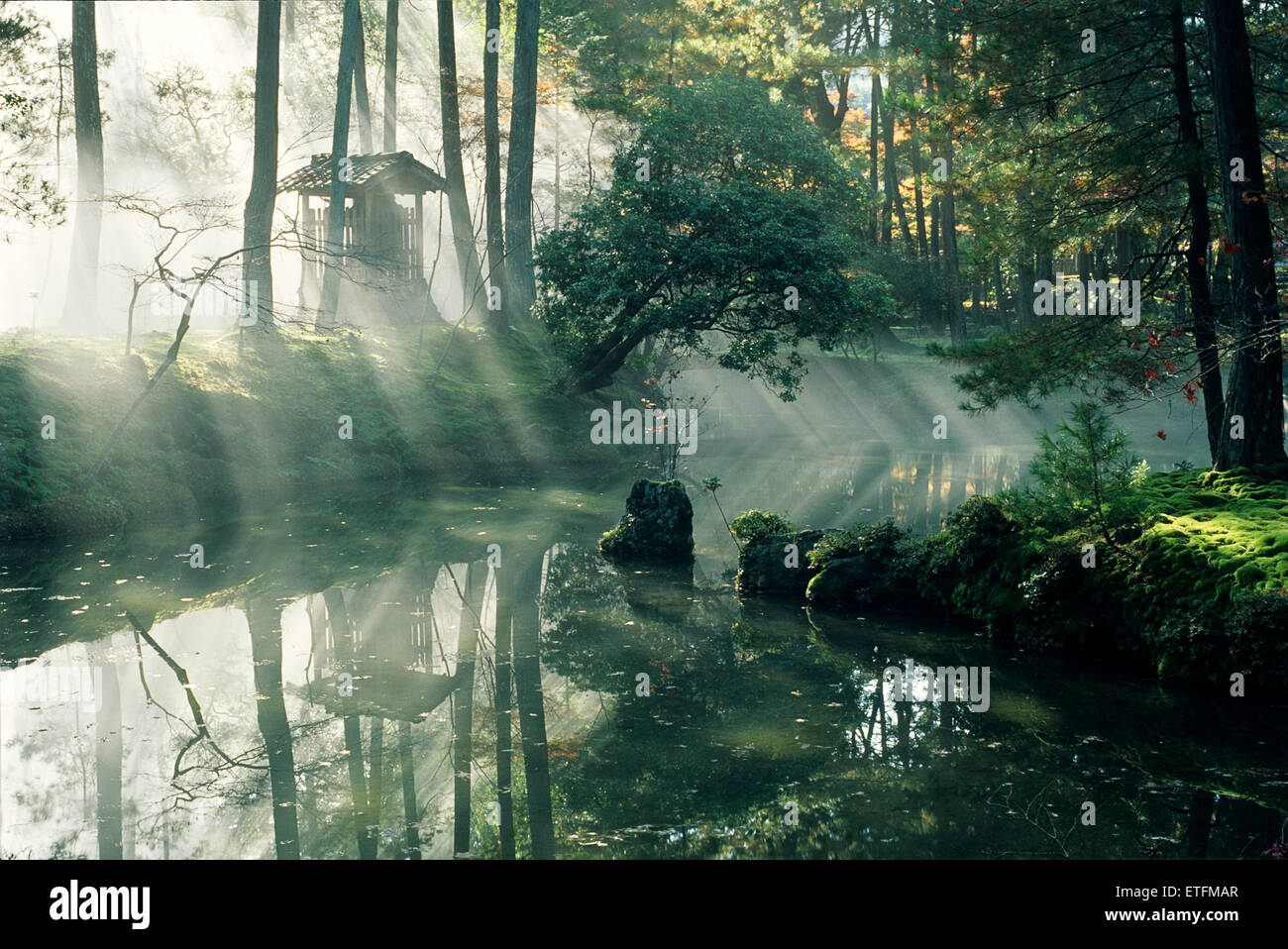 A drift of morning mist creates a mysterious atmosphere in the 900 year old garden of Saiho-ji, also known as Koka - Stock Image