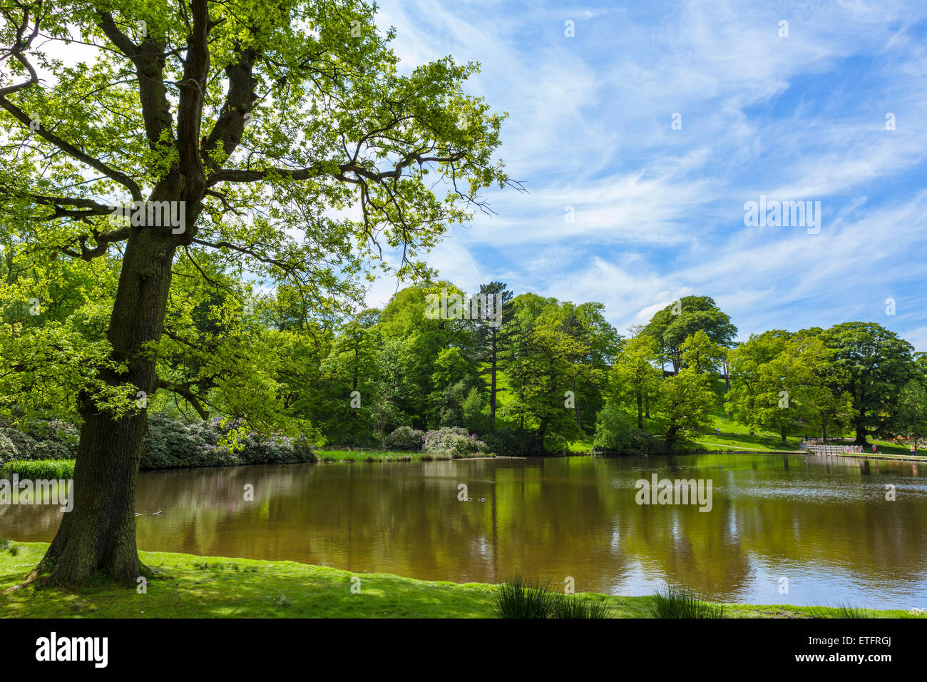 Millpond at Lyme Park, the house was featured as Pemberley in BBC series 'Pride and Prejudice', Disley, - Stock Image