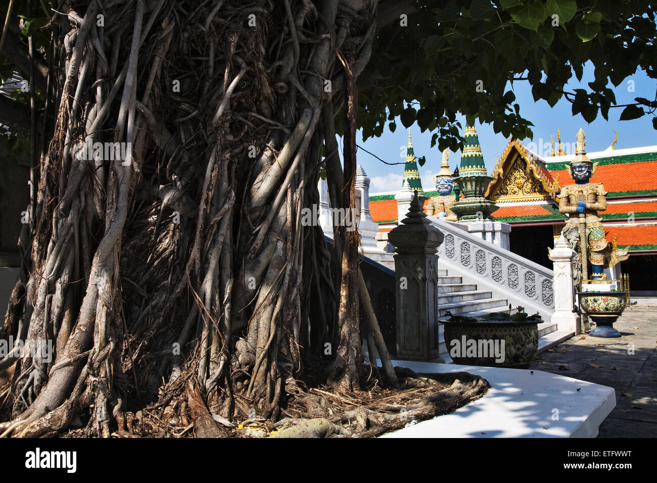 A large Bodhi tree in the courtyard of the Grand Palace in Ko Rattanakosin in downtown Bangkok is guarded by fierce Stock Photo