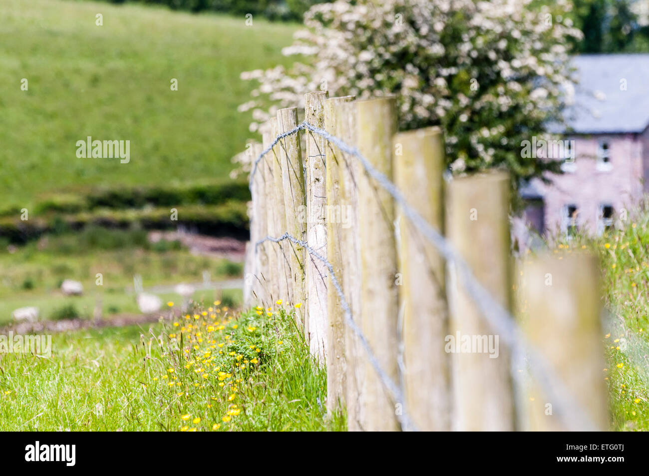 Barbed wire fence and posts in a field in Ireland - Stock Image