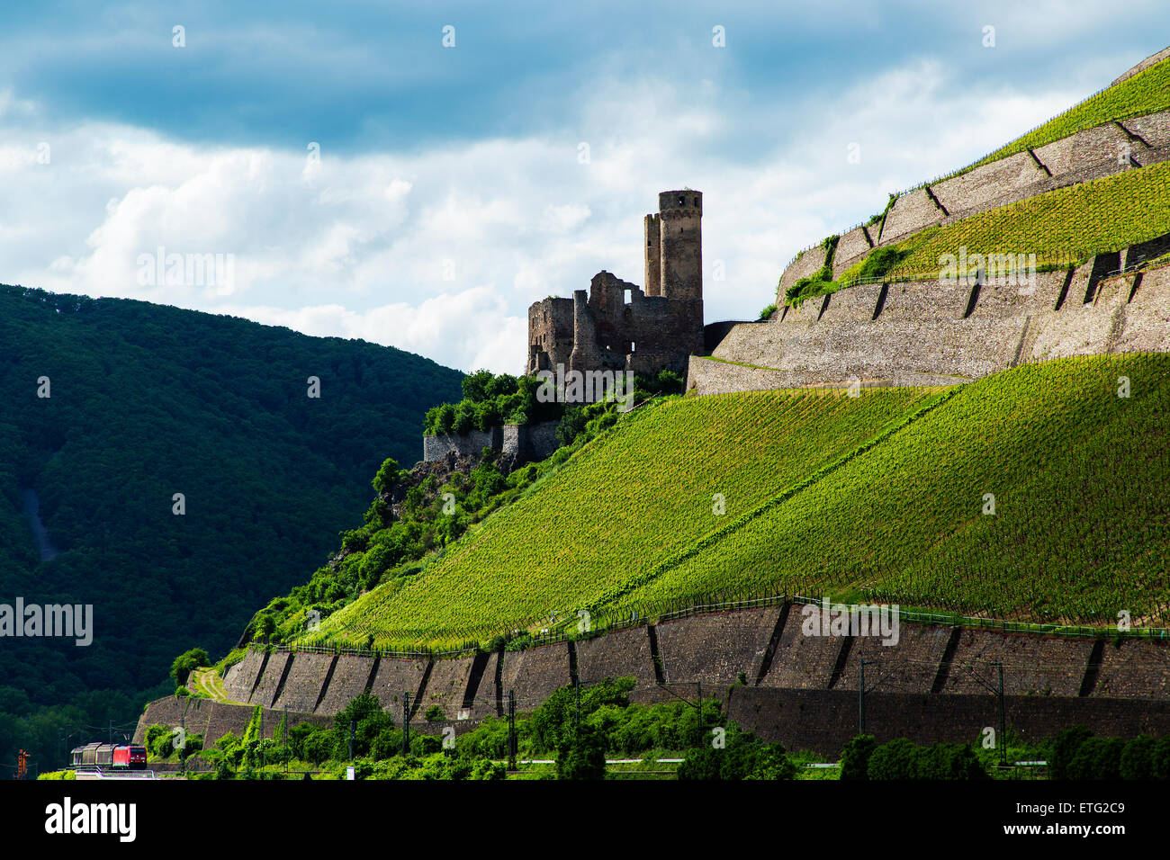 Ruined Castle Ehrenfels on the River Rhine Rudesheim Hesse Germany Europe - Stock Image