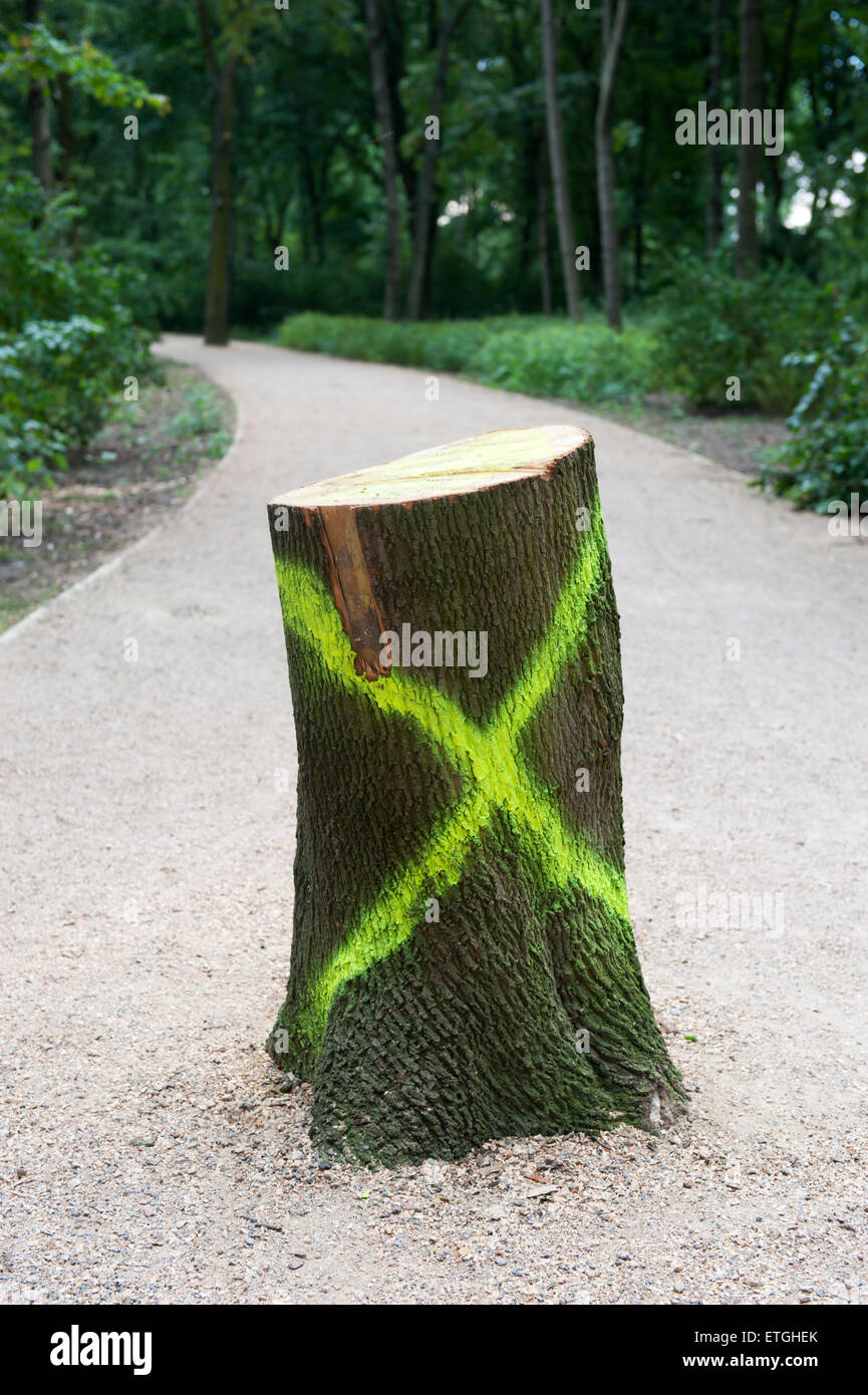 Tree stub with a mark in a park in Berlin Germany Europe - Stock Image