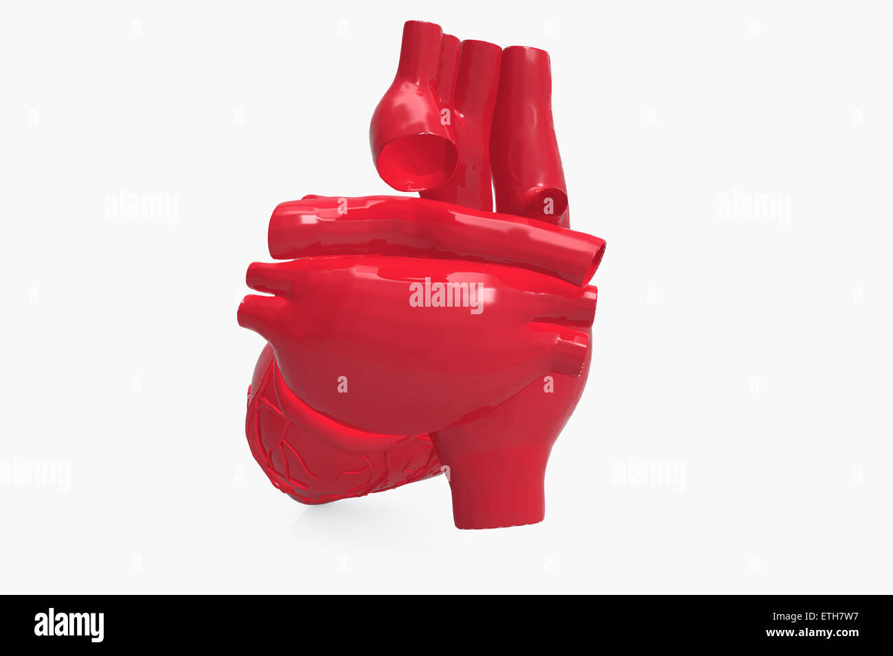 Human Heart - Stock Image