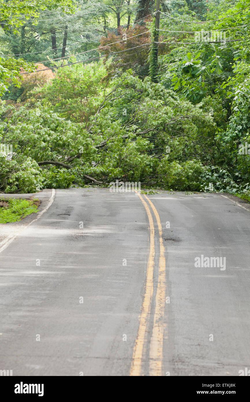 Fallen tree in roadway - USA Stock Photo