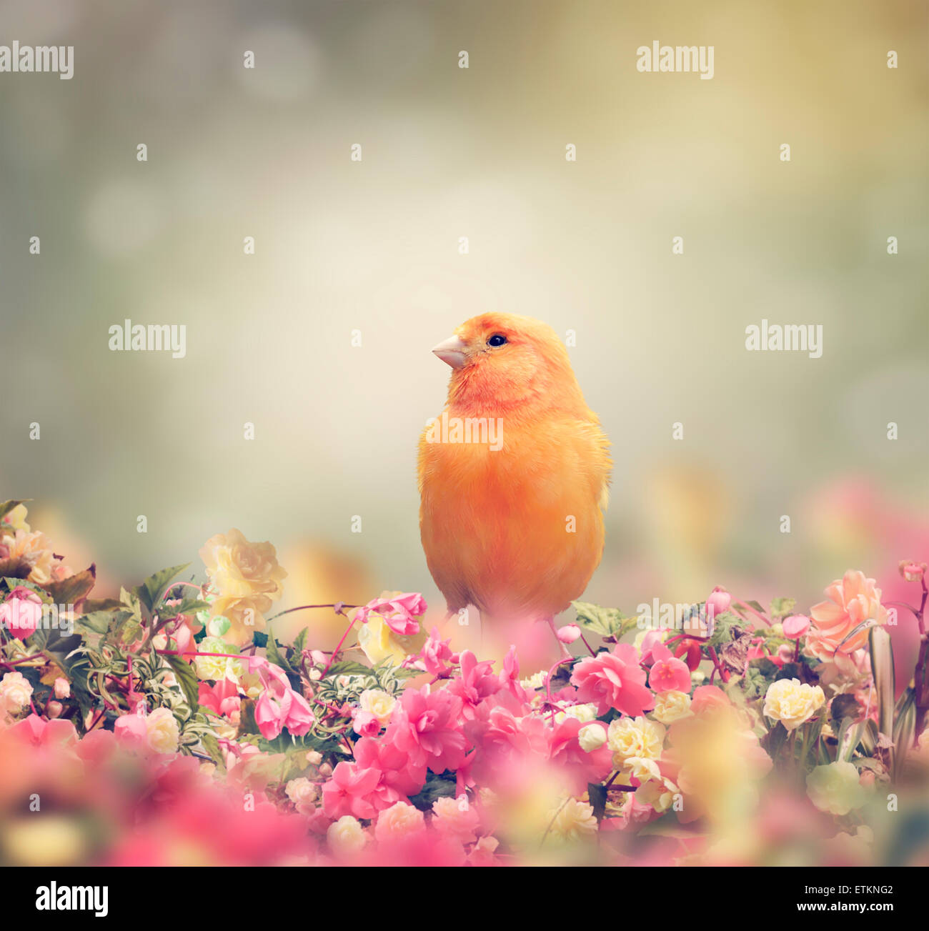 Yellow Bird Perches In Flower Garden - Stock Image