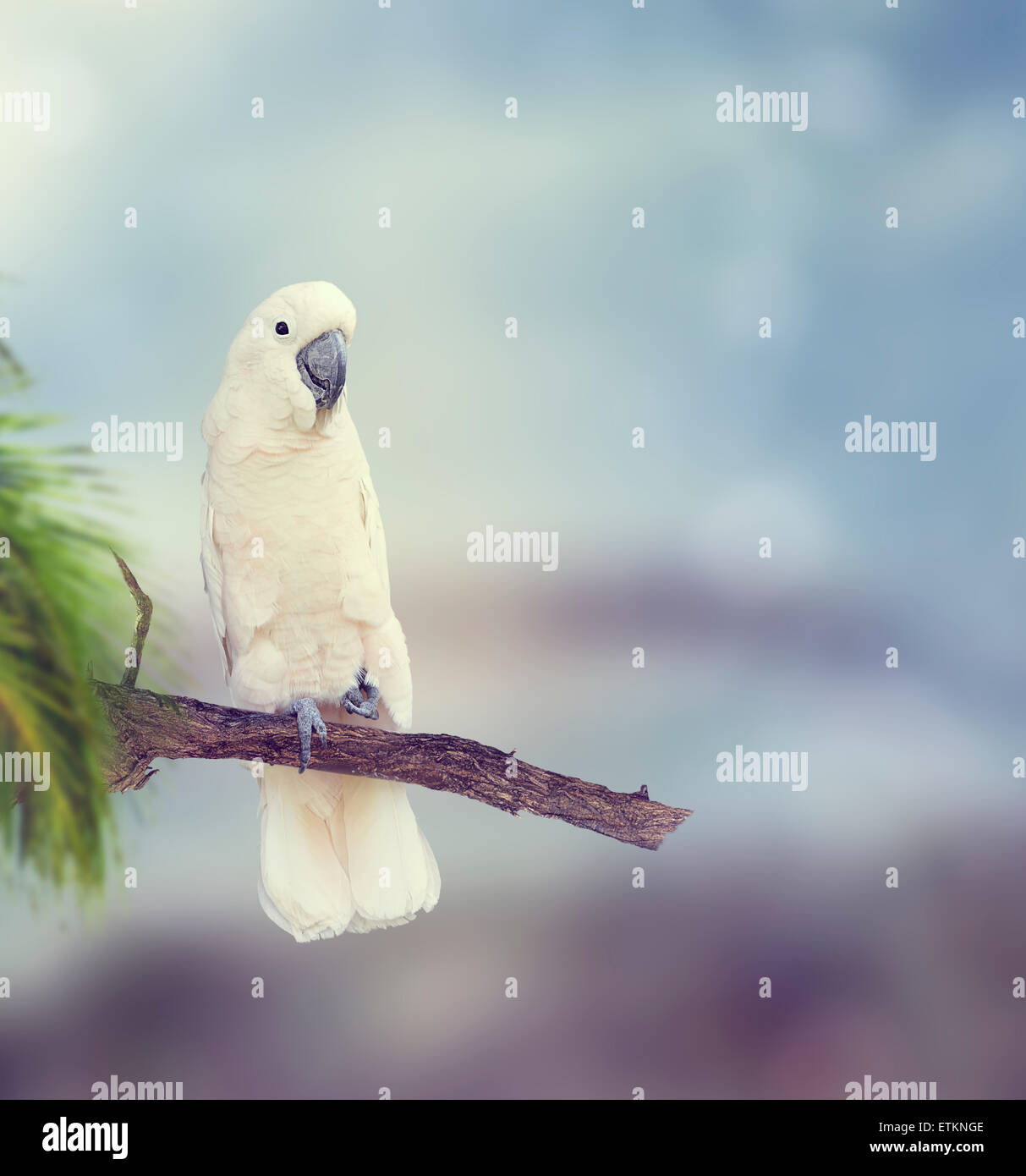 White Parrot Perches on a Branch - Stock Image