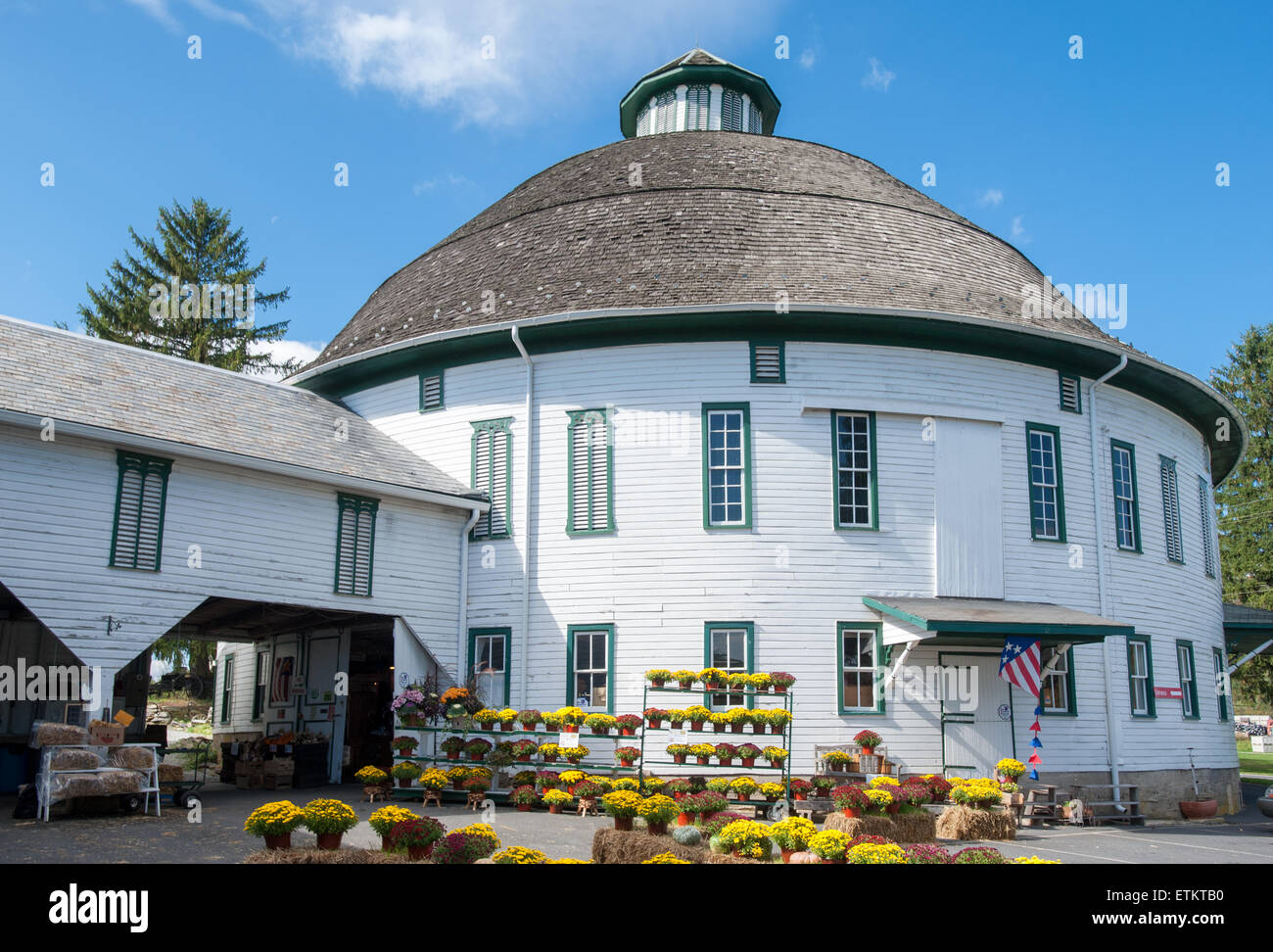 Mums for sale at the Round Barn in Cashtown, Pennsylvania, USA - Stock Image