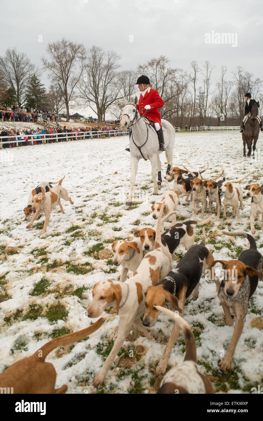 Fox hunters and foxhounds during the Blessing of the Hounds at St. James Church in Monkton, Maryland, USA. - Stock Image