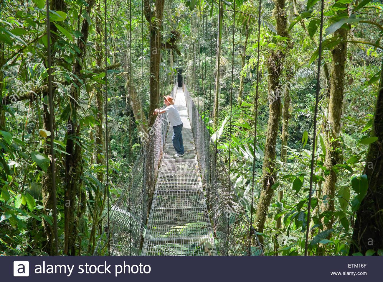 Man standing on hanging bridge in rainforest, La Fortuna, Alajuela Province, Costa Rica, Central America - Stock Image