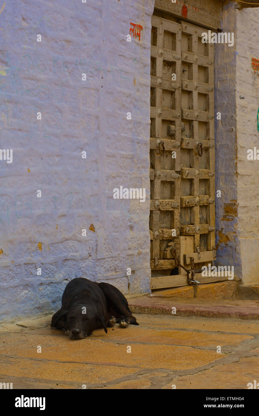 Dog asleep outside a house in Jaisalmer, Rajasthan, India - Stock Image