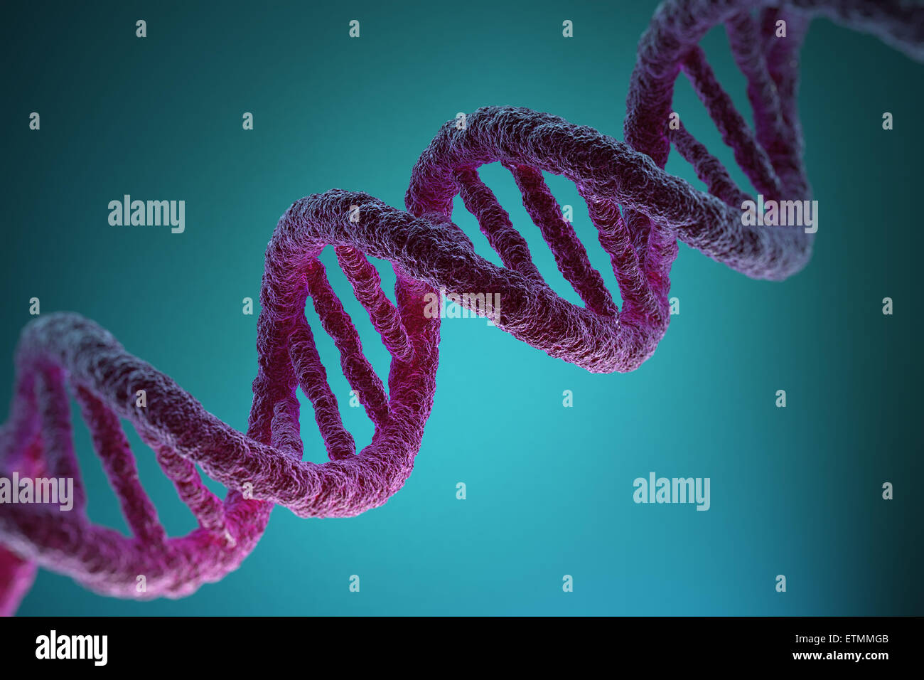 an in depth description of the human dna Dna synonyms, dna pronunciation, dna translation, english dictionary definition of dna dna a adenine t thymine c cytosine g guanine n a nucleic acid that carries the genetic information in cells and some viruses, consisting of two long dna - definition of dna by the free dictionary.