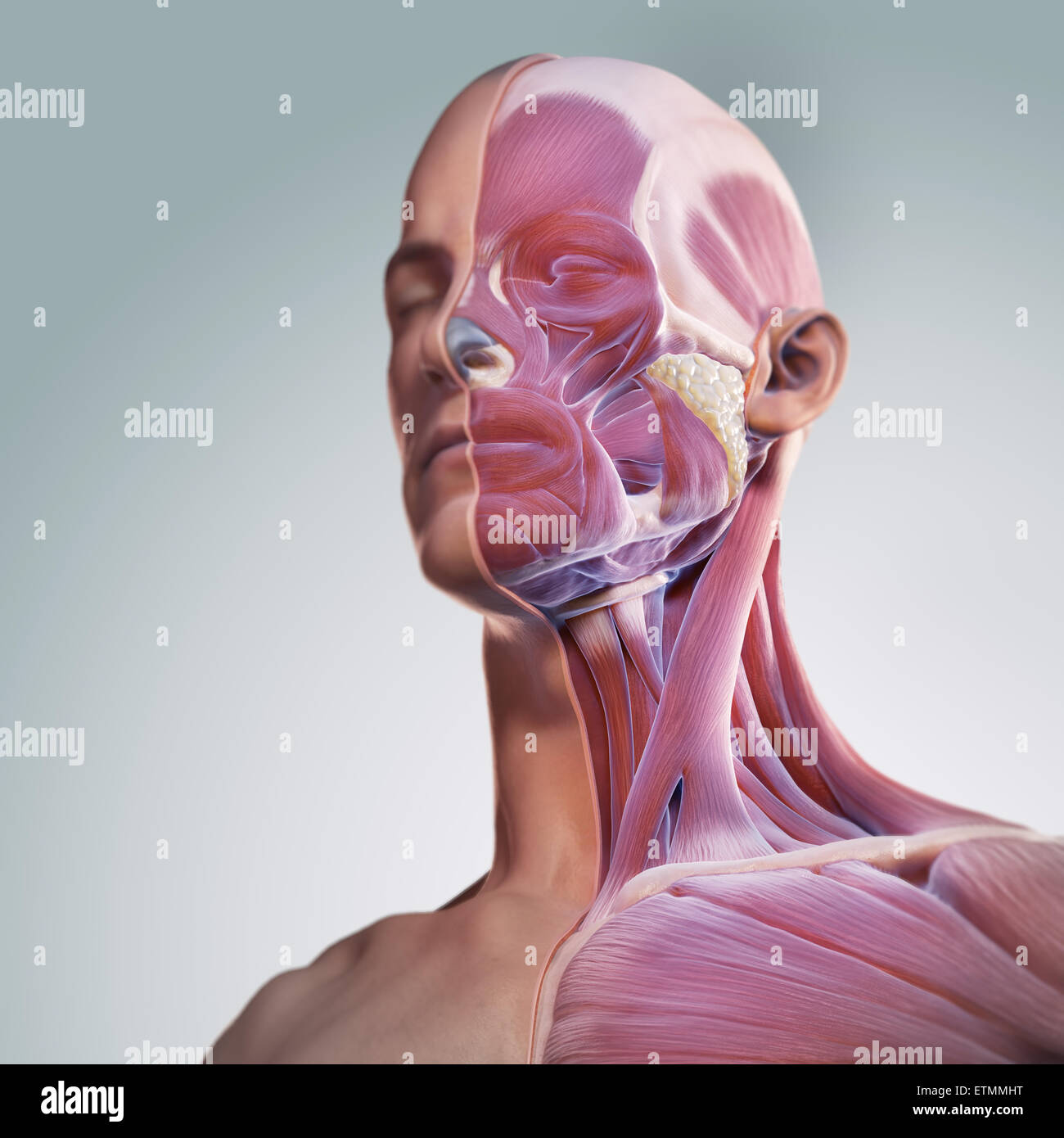 Conceptual image of the face with muscles exposed on one side. Stock Photo