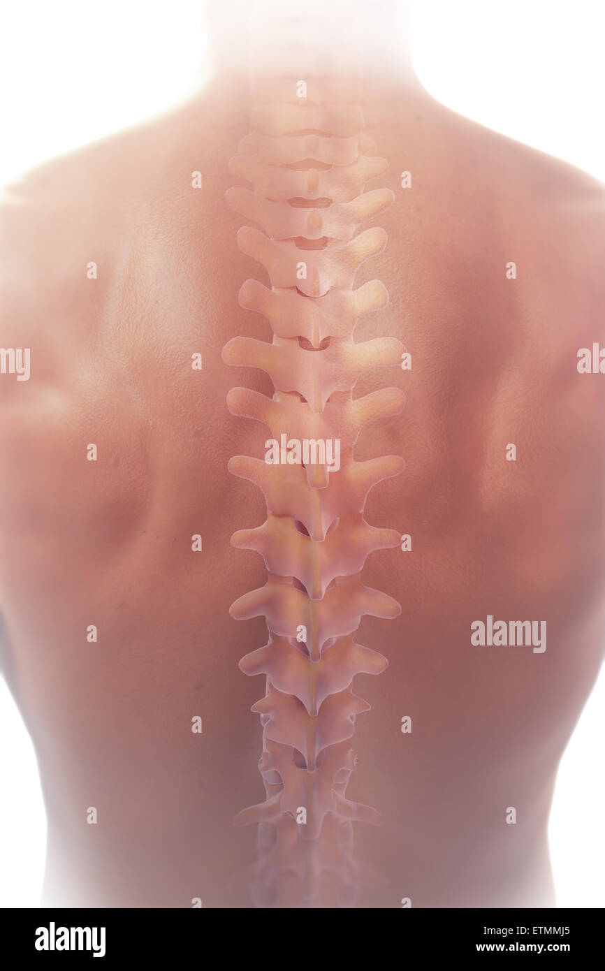 3d Spine Stock Photos & 3d Spine Stock Images - Alamy