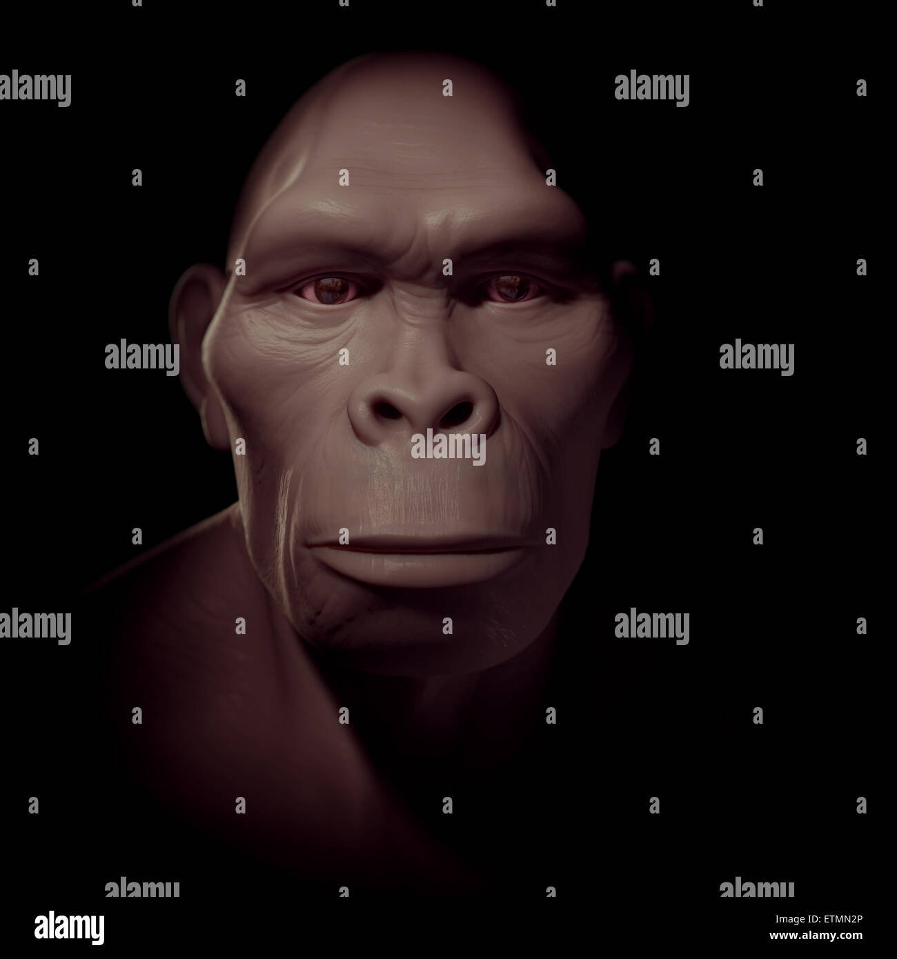 Depiction of a Homo Habilis, an extinct genus of hominids and ancestor to Homo Sapiens - Stock Image