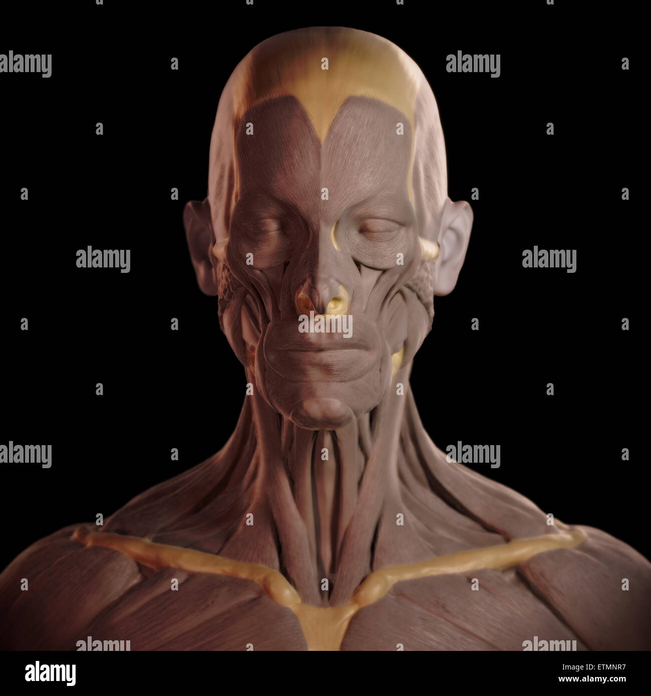 Conceptual image in the style of a clay model of the muscles of the face. Stock Photo