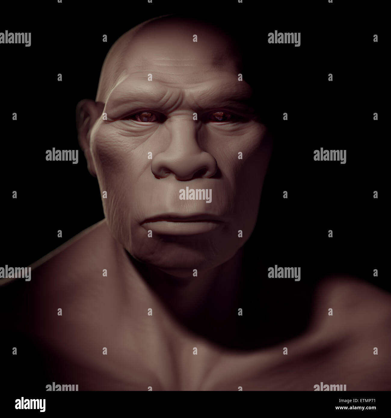 Depiction of a Homo Erectus, an extinct genus of hominids and ancestor to Homo Sapiens. - Stock Image