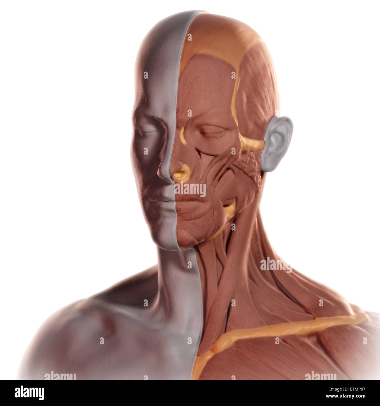 Conceptual image in the style of a clay model of the face with muscle exposed on one side. Stock Photo