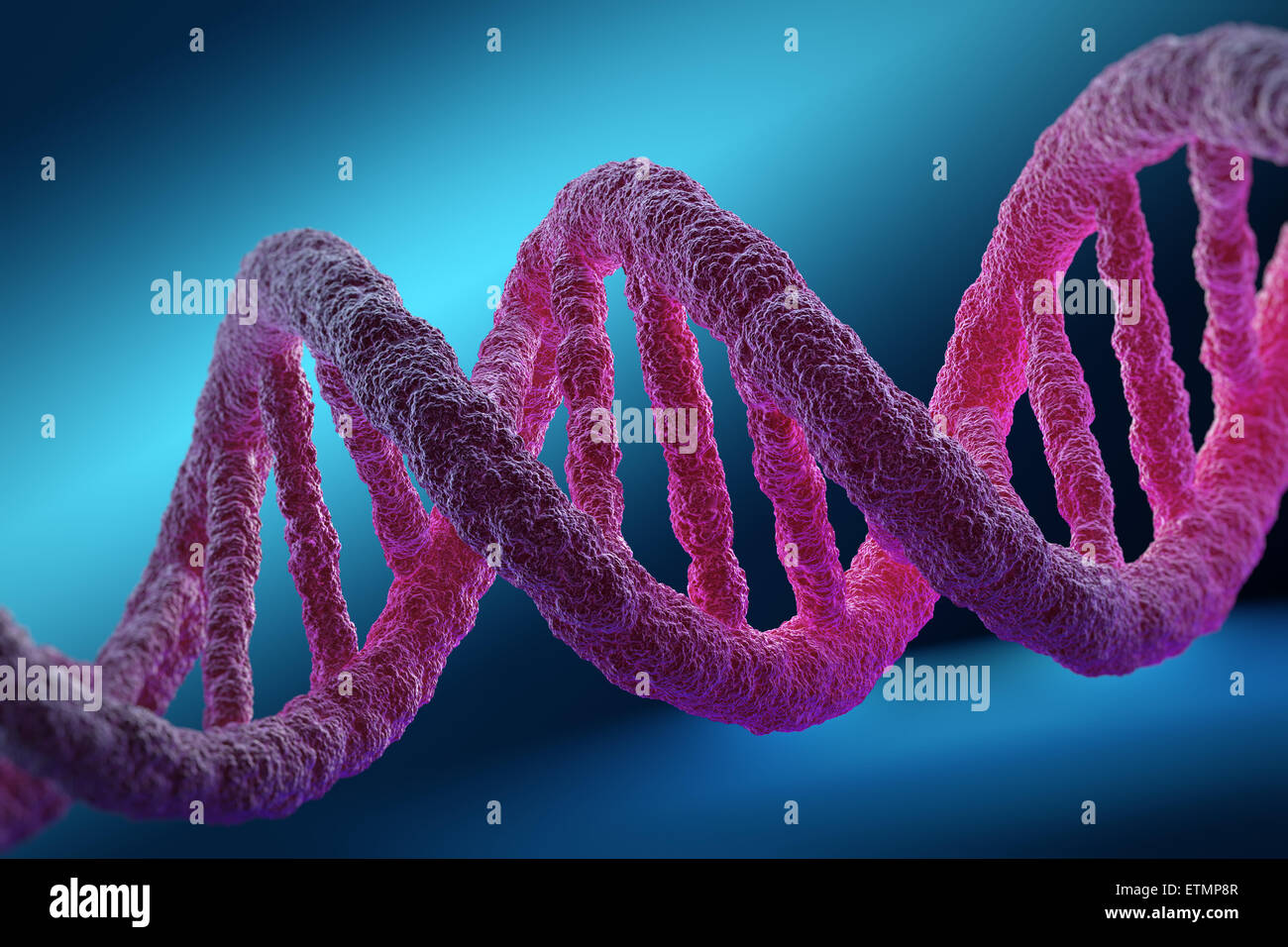 Stylized illustration of strands of human DNA, deoxyribonucleic acid. - Stock Image