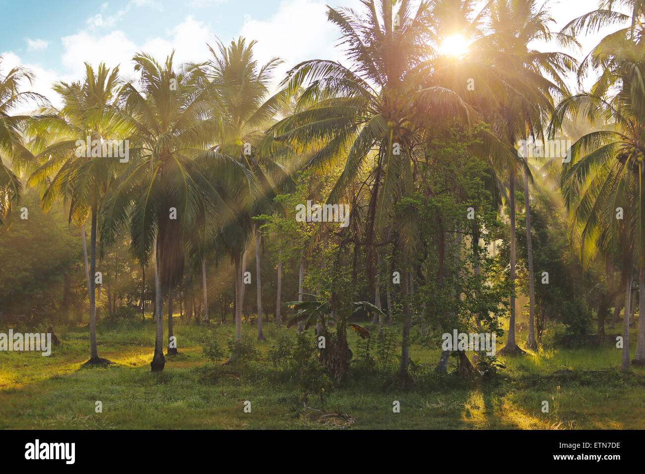 Sunlight beaming through palm trees in a tropical garden, Thailand - Stock Image