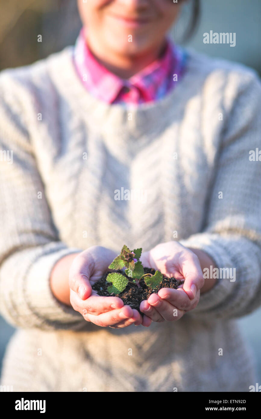 Woman holding seedling in the palm  of her hands - Stock Image